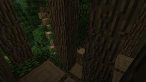 Big Trees gros arbre 2