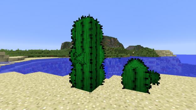 cactus-625x352
